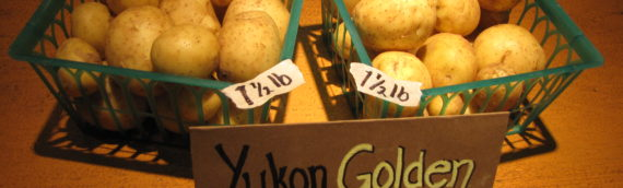 Yukon Golden Nuggets